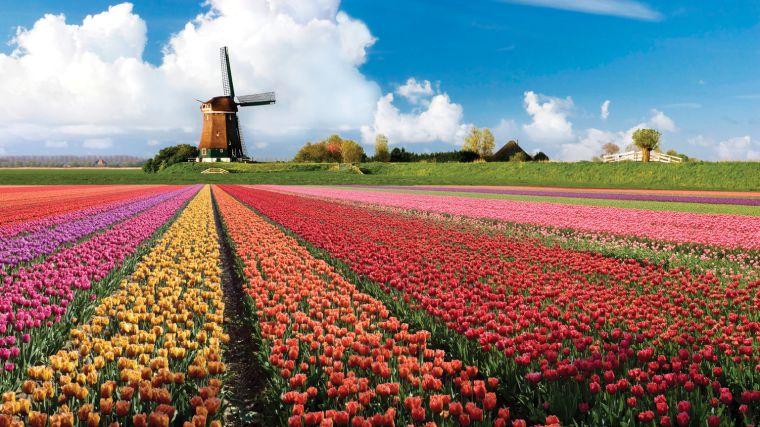 Keukenhof-Garden-Amsterdam