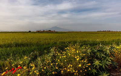 Yellow fields of Sicily.