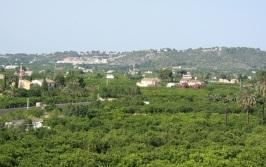 carcaixent-valencia-orange-groves