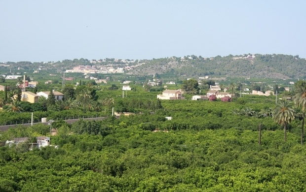 carcaixent-valencia-orange-groves